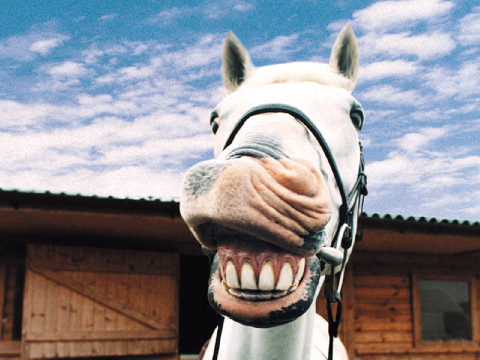 wallpapers: Funny Farm Animals
