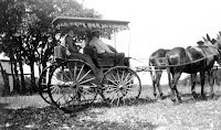 Surrey Wagon near Kerrville