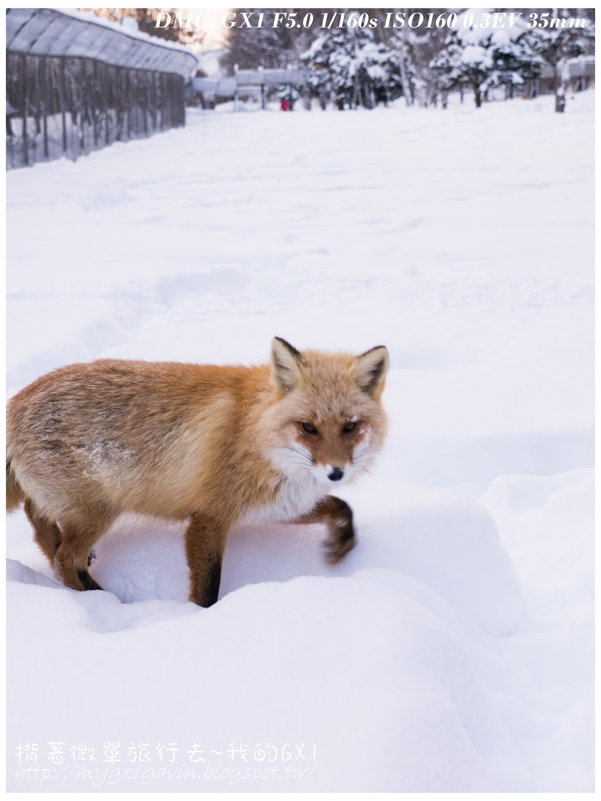 【北海道】北見狐貍村休息站 - 揹著微單旅行去~My Olympus EM1