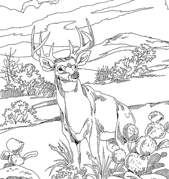 Coloring Pages Of Forest Coloring Pages