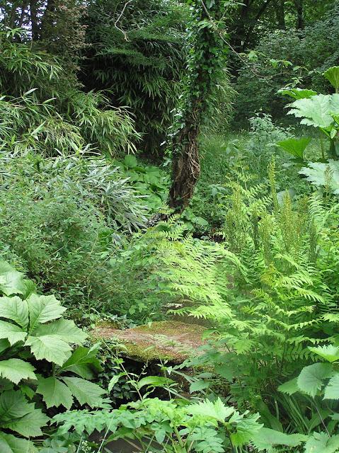 rośliny w cieniu, ogród leśny