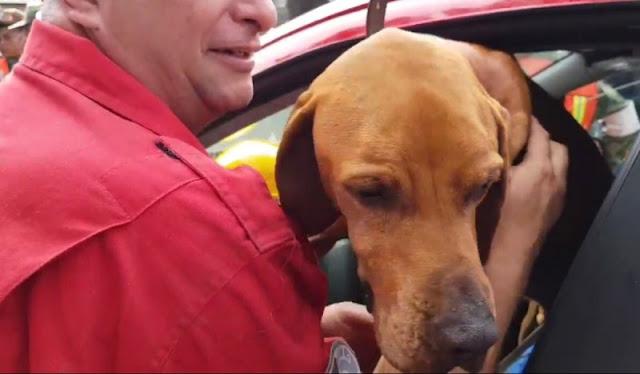 Titán, el perro que ha rescatado al menos a 26 personas en derrumbes de la CDMX.
