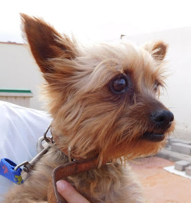 PATY BUSCA FAMILIA- LOOKING FOR A HOME - SUCHT EIN ZUHAUSE