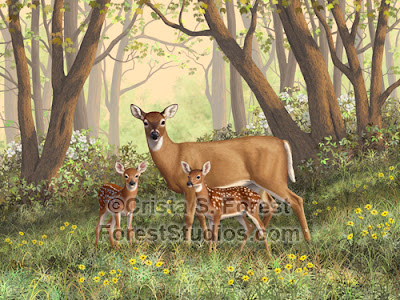 http://pixels.com/featured/whitetail-doe-and-fawns-moms-little-spring-blossoms-crista-forest.html