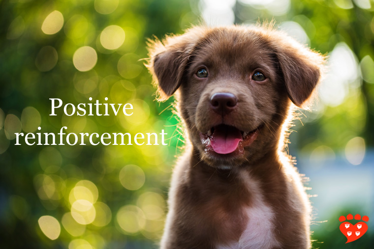 A user-friendly guide to everything you need to know about positive reinforcement