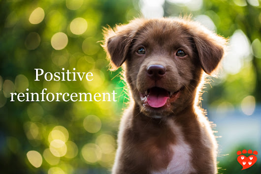 What is Positive Reinforcement in Dog Training?