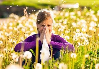 Κυριότερα είδη φυτών που προκαλούν με τη γύρη τους αλλεργικές εκδηλώσεις, καθώς και η περίοδος ανθοφορίας τους