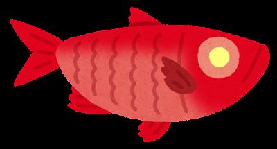 キンメダイのイラスト(深海魚・金目)