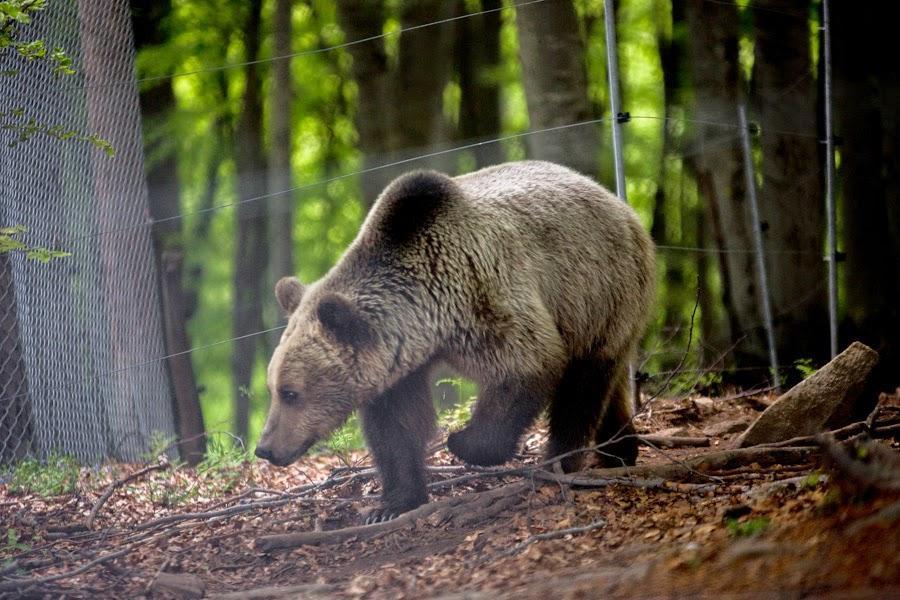 Οι αρκούδες στο Καταφύγιο ξύπνησαν και υποδέχονται την Άνοιξη