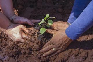 Cómo plantar un árbol en el desierto