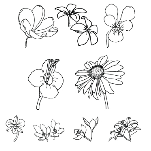 Different Types Of Flowers For Drawing