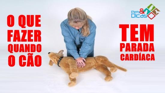 O que fazer quando o cão tem parada cardíaca