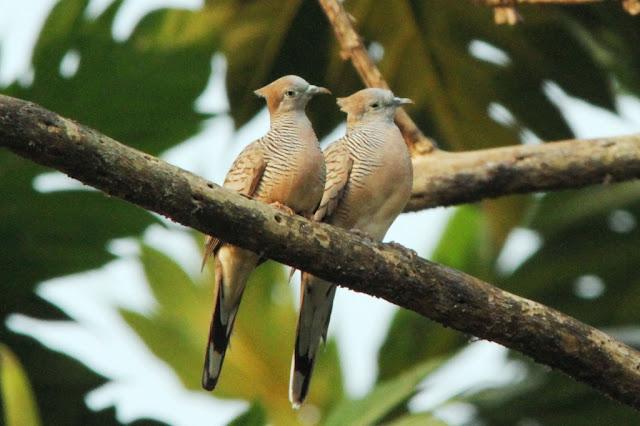 Nusantara Birdfarm