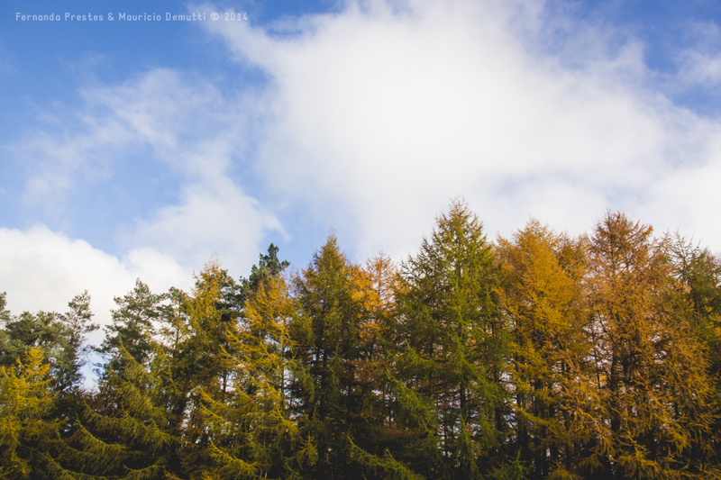 topo das árvores e o céu