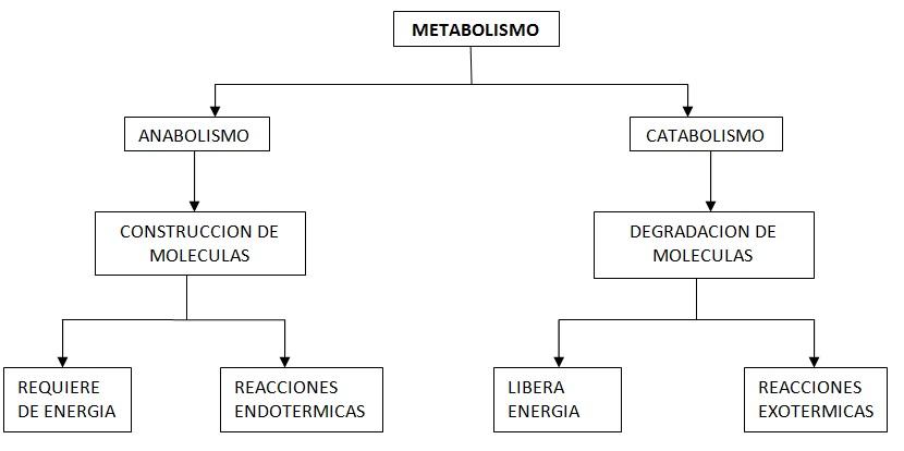 BIOLOGIA GENERAL: UNIDAD II.- PROCESOS CELULARES