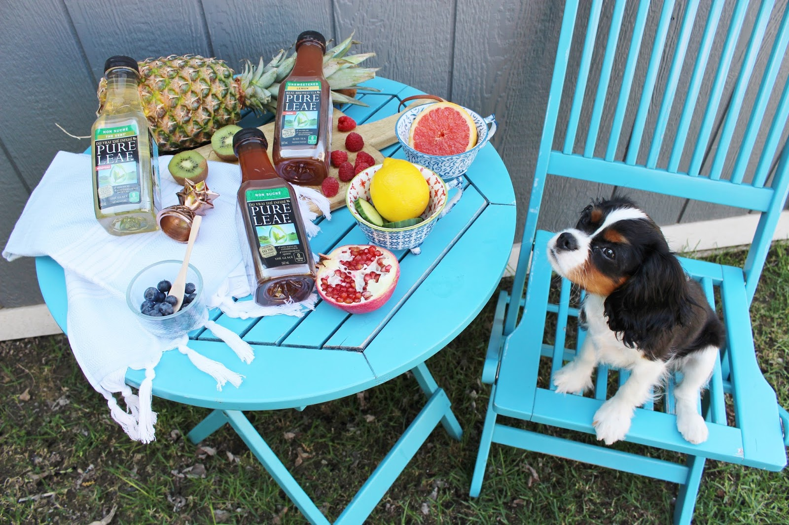 Pure Leaf unsweetened tea recipes for summer with Cavalier King Charles Spaniel