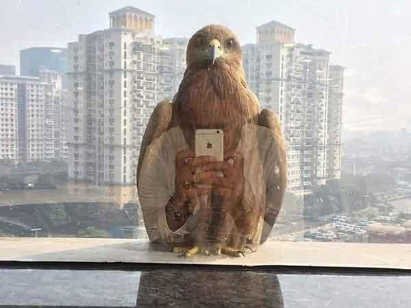 Burung Elang Selfie