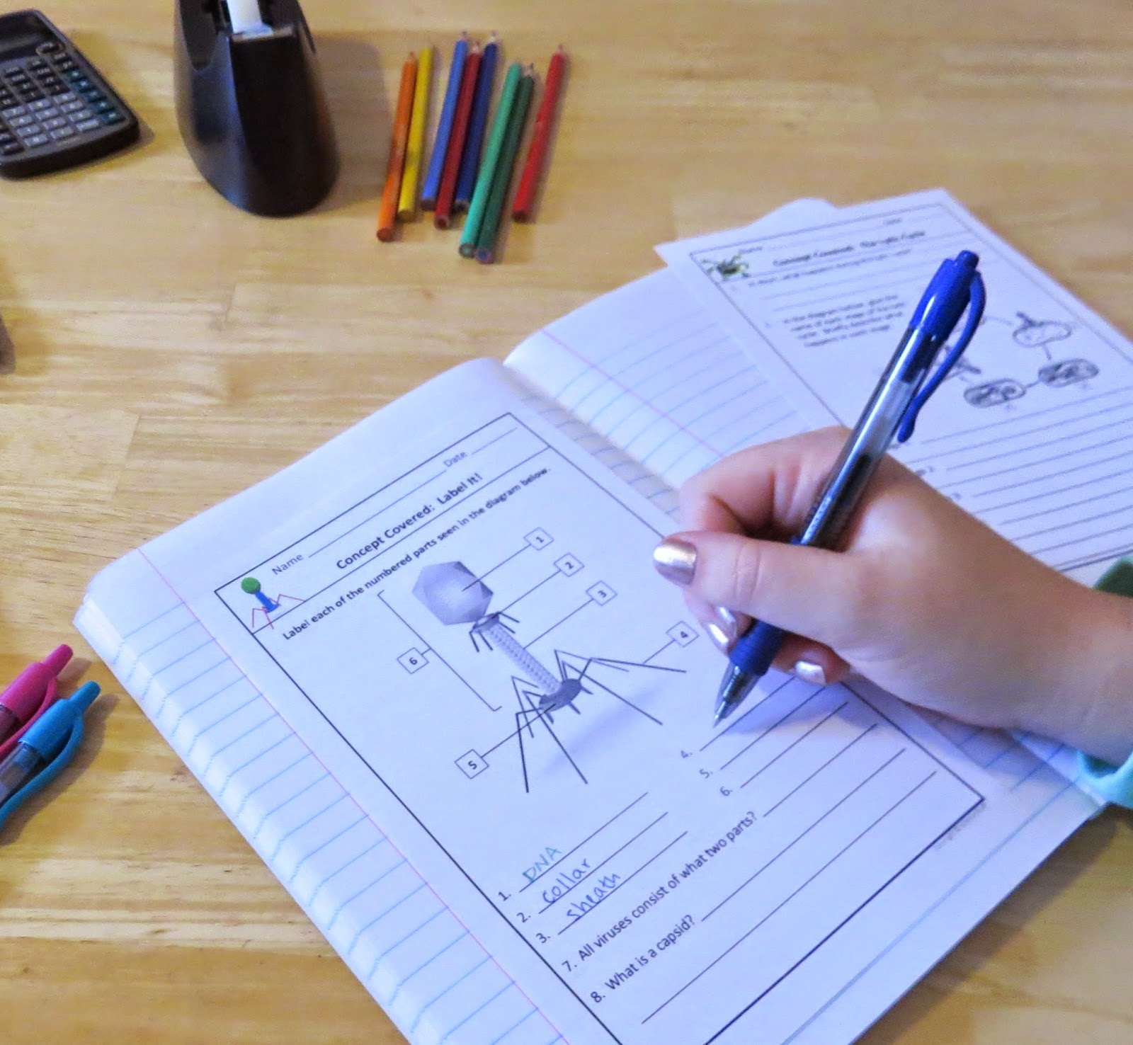 Amy Brown Science Interactive Notebooks Make Teaching Viruses And Bacteria A Snap