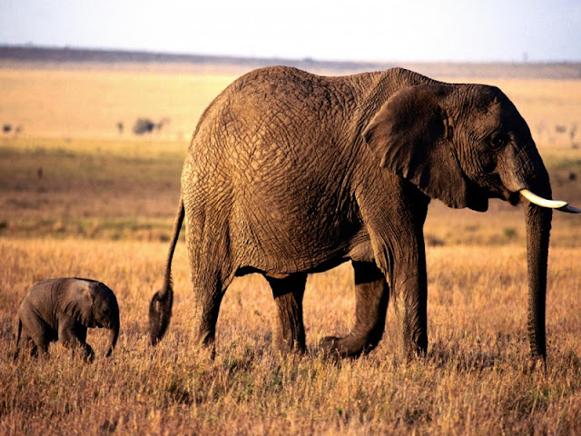 Cute Funny Babies Hd Wallpapers Beautiful Pictures Of Elephant In Hd