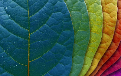 different color leaves widescreen hd wallpaper