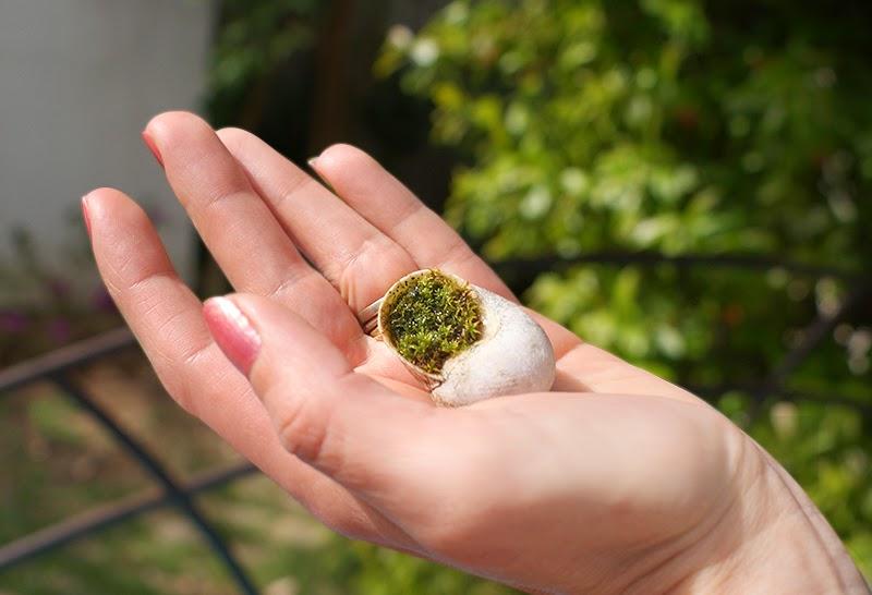 lulusuperglu faire pousser une plante dans une coquille d 39 escargot. Black Bedroom Furniture Sets. Home Design Ideas