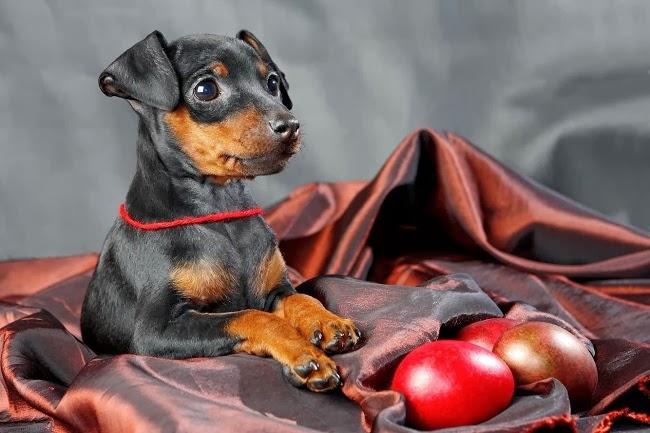 Owoce i warzywa w diecie psa