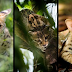 'Super Cats: A Nature Miniseries' -  Next Episode airs Wednesday, November 7 on PBS