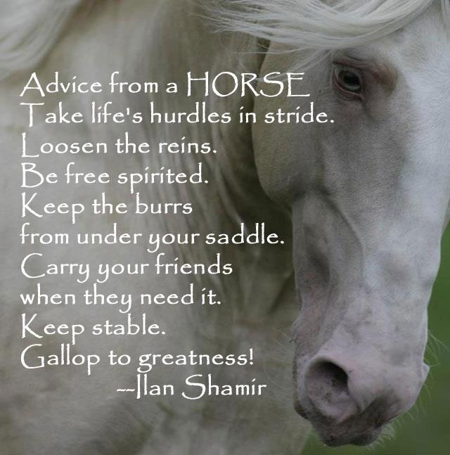 4 Quotes: 418 best Inspiring Horse Quotes images on Pinterest