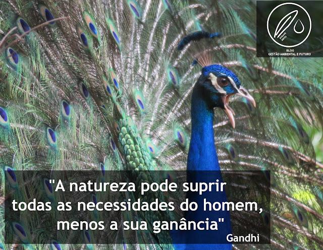 Gandhi, Frase ambiental