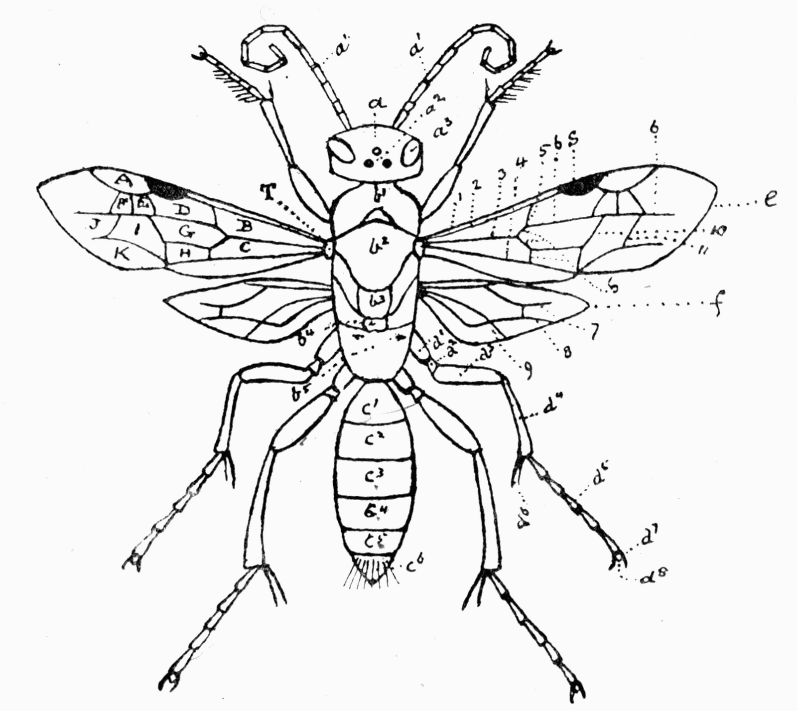 Reading Roses Amp Prose Busy As A Bee Clip Art