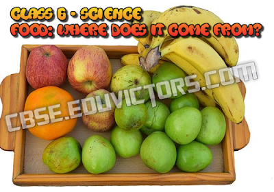 CBSE Class 6 - Science - Food: Where Does It Come From? - Extra Q & A (#cbsenotes)(#eduvictors)
