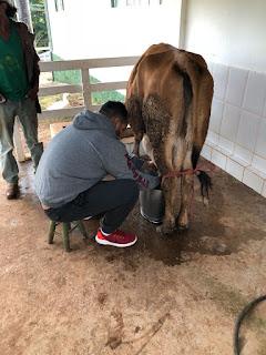 leite ao pe da vaca