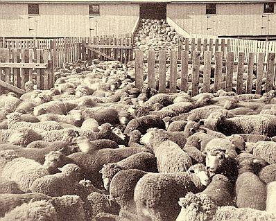 The sheep pen