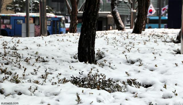 Nieve sobre arbustos en Seúl