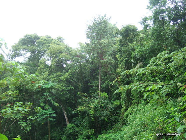 Costa Rica- Green planet