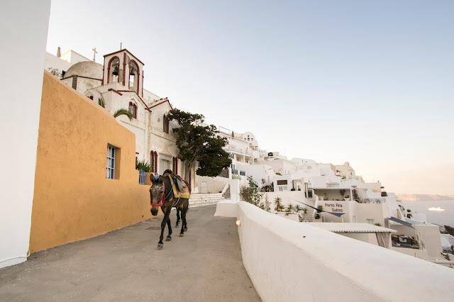 Asini a Fira-Santorini