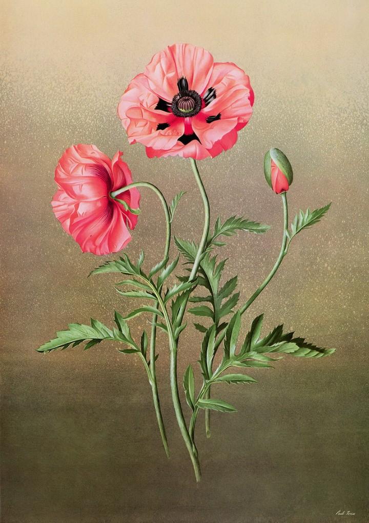 Paul Jones. Акварельные рисунки цветов 17