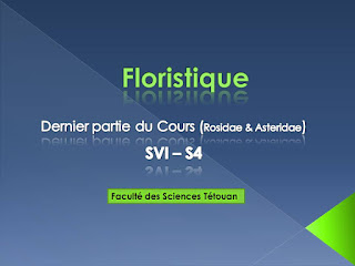 Dernier Partie Du Cours Floristique Svi S4 Biologie Maroc