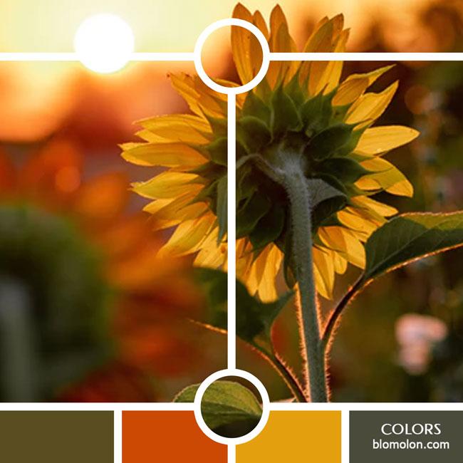 variedad_en_color_color_32