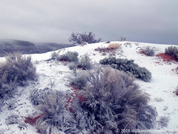 A fresh dusting of snow frosts a dune and plants, with the snowstorm off in the distance, at Coral Pink Sand Dunes State Park near Kanab, Utah.