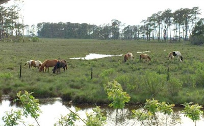 Chincoteague and Assateague Islands