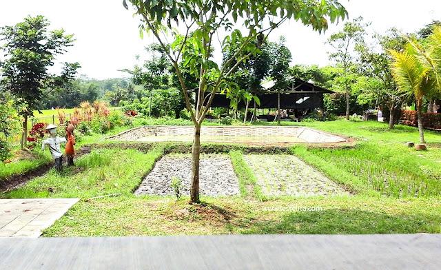 PicsArt 02 12 04.43.53 - Milkindo, Wisata Edukasi Peternakan Sapi perah Di Malang