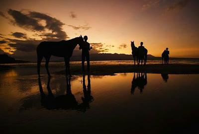 Pantai Pink dan Kalaki kuda hitam