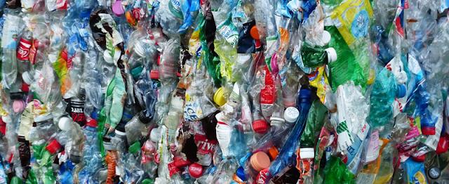 Encuentran hongo que degrada plásticos en menos de tres días