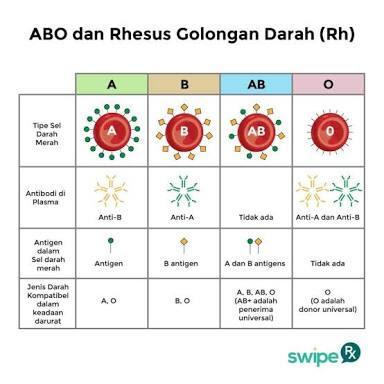 tabel golongan darah materi PMR