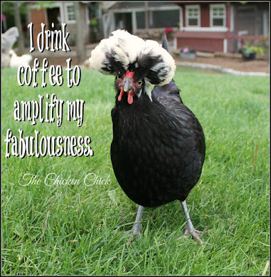 I drink coffee to amplify my fabulocity. via The Chicken Chick®