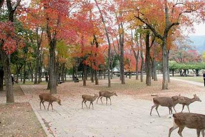 Lupakan Tokyo! Mari Berkunjung ke 13 Tempat Wisata di Nara (Jepang)!!