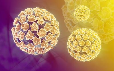 Virut HPV tồn ở ngoài môi trường trong vòng bao lâu mới chết