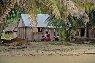 Arbre du voyageur Sainte-Marie Madagascar