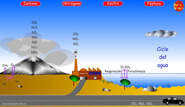 Enlace con los Ciclos Biogeoquímicos (actualización)